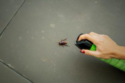 hubení švábů praha