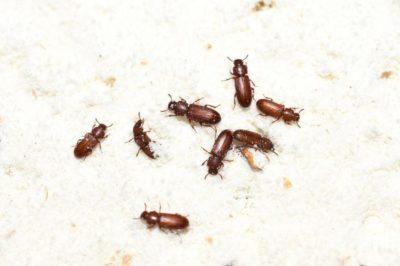 hmyz v domácnosti