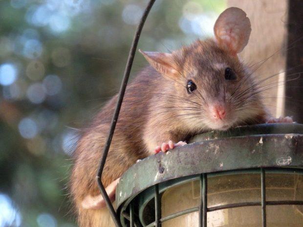 02: myš